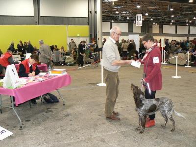 classe jeune expo canine